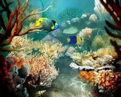 sfondi mare e pesci 29