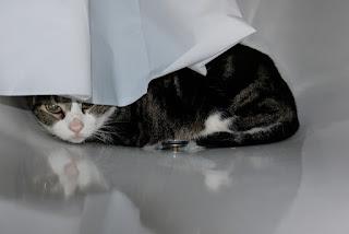 Alasan Kucing Bersembunyi