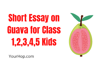 Essay on Guava