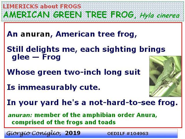 limerick; amphibians; frog (anuran); tree-frog; U.S.