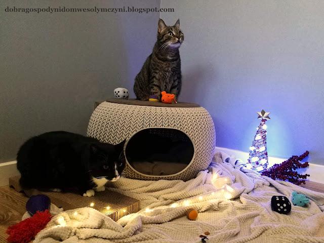 kot i legowisko, kot i drapak, zabawki dla kota