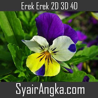 Erek Erek Bunga Banci 2D 3D 4D
