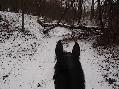 konie, jazda konna w zimie, jazda konna w terenie