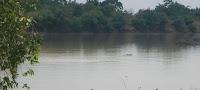 Rivière aux Hippopotames de Lofigué