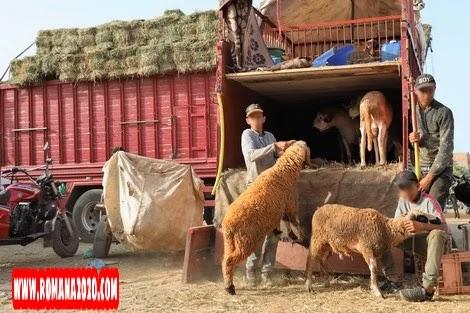 أخبار المغرب: حزب مغربي يقترح إلغاء عيد الأضحى بسبب جائحة فيروس كورونا بالمغرب covid-19 corona virus كوفيد-19