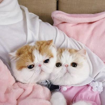 www.kucingmanja.com