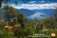 Ambra e il lago Maggiore