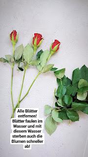 DiY: Wie bleiben Blumen länger frisch? - www.annitschkasblog.de