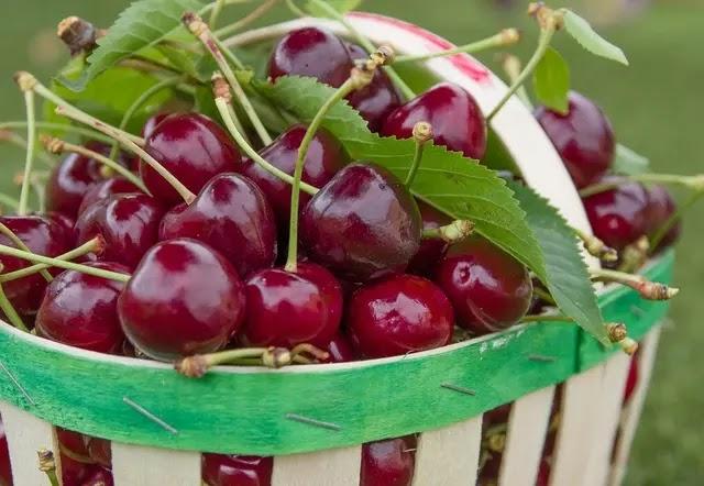 Cherry   Benefits of Cherries