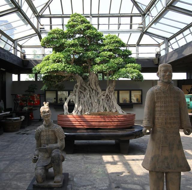 Bonsai de Ficus em Crespi, Itália, com mais de 1000 anos