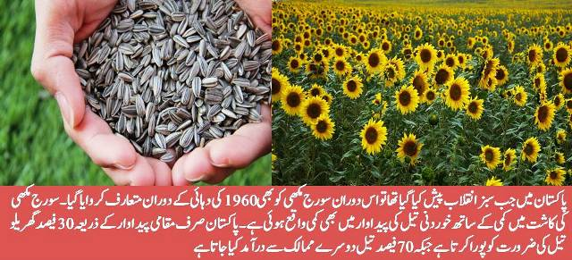 Sunflower Origin History and its Cultivation