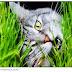 Por que os gatos às vezes comem plantas?