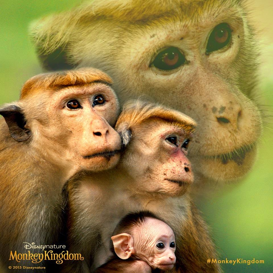 Average Socialite Monkey Kingdom Premiere La