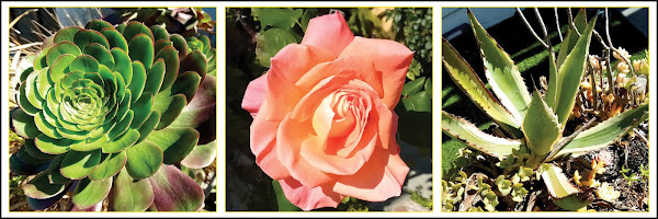 southern California flora