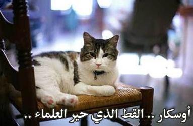 1af088e07 القطط حيوانات اجتماعية أليفة اعتاد البشر رؤيتها حولهم منذ أقدم العصور.  البعض يحبها ويشفق عليها لجمالها وذكاءها، و البعض يمقتها لأنها تتسلل خلسة  إلى مطبخه ...