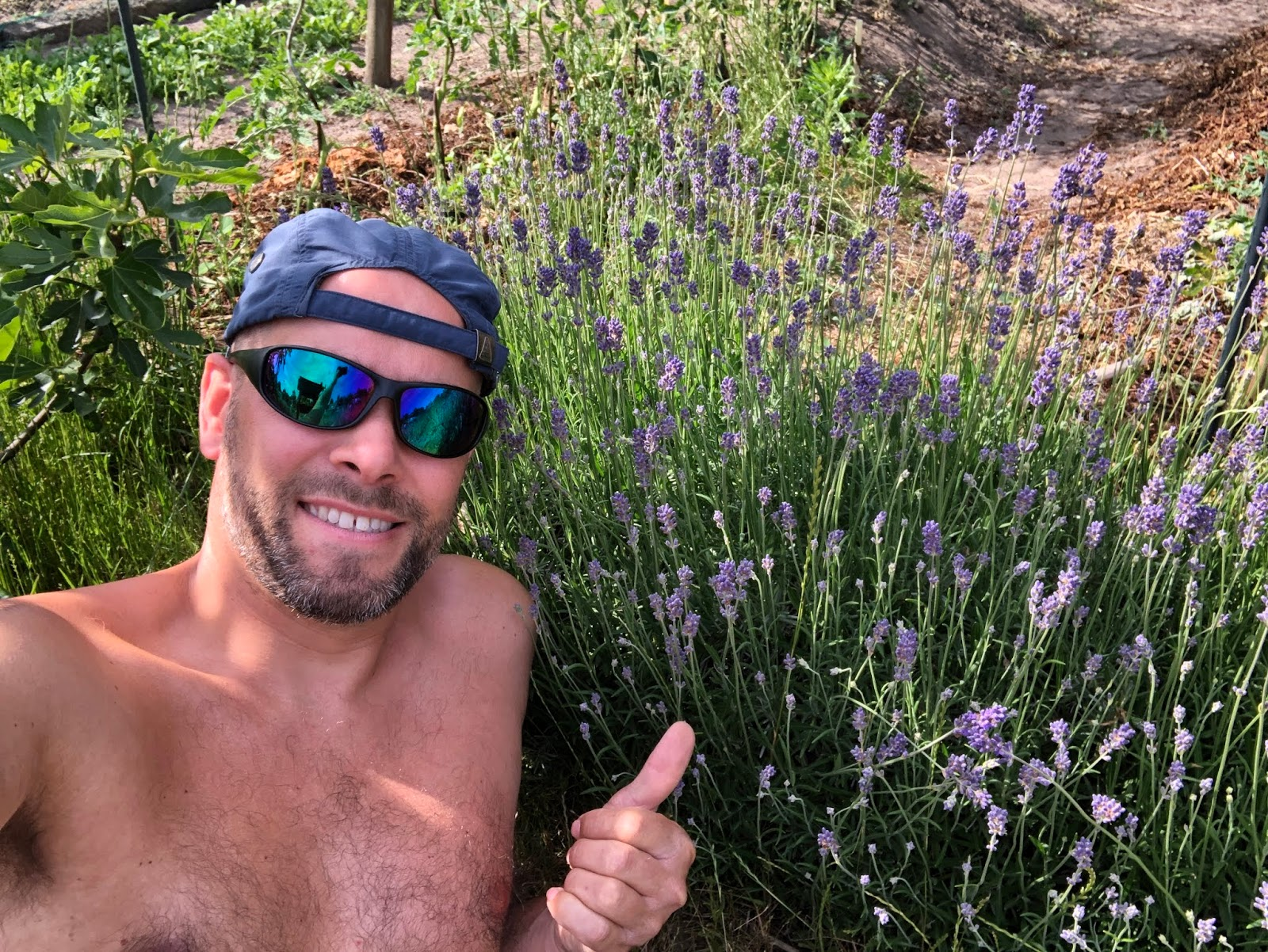droogte 2020 moestuin volkstuin lavendel thierry baudet