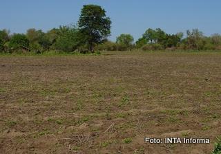 carta de suelos de INTA