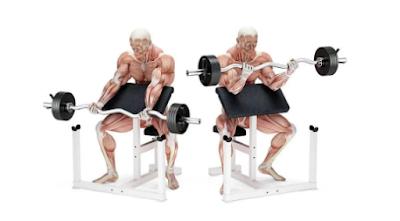 Preacher curl – Biceps Exercise