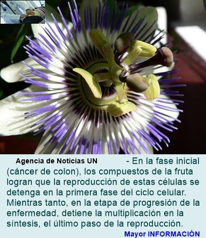 El maracuyá tiene propiedades anticancerígenas