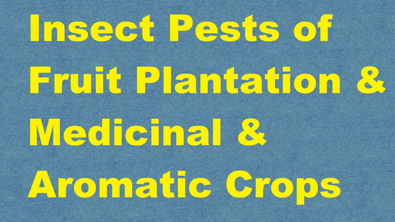 Insect Pests of Fruit Plantation Medicinal and Aromatic ...