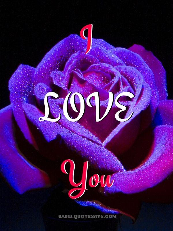 I Love You Images with Blue & Violet Rose