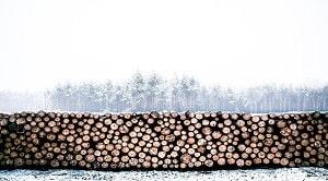 Selain faktor di atas, faktor-faktor yang mampu mempengaruhi berat jenis kayu menurut Casey (1952) terdiri dari 4 bagian yakni:  Kecepatan Tumbuh Letak Kayu dalam Batang Tempat Tumbuh Umur Pohon