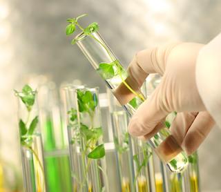 gellan gum in plant tissue culture