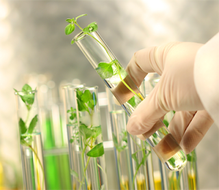 LOW ACYL GELLAN GUM solutions and applications- Plant Tissue Culture