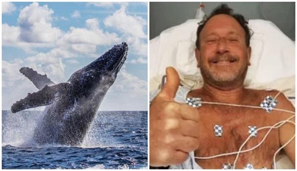 Homem sobrevive depois de ser abocanhado e cuspido por baleia nos EUA