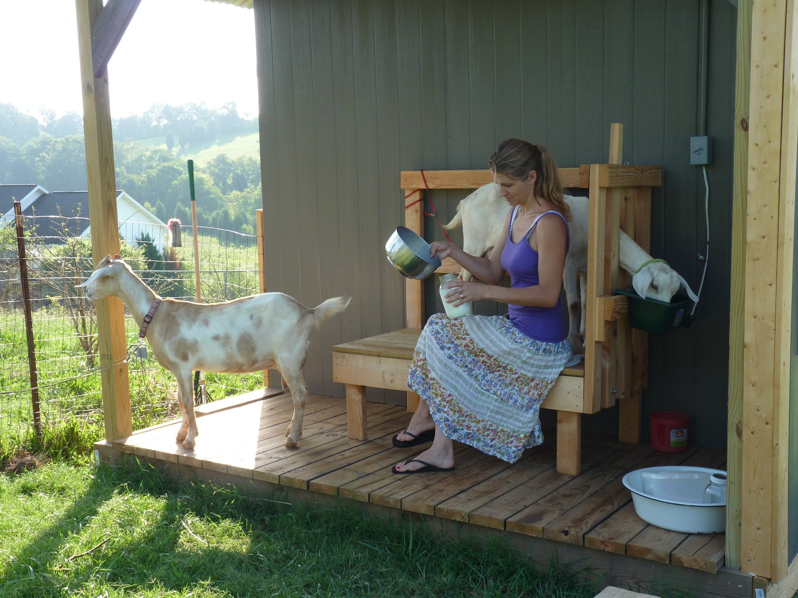 At The Butterfly Ball Milking The Goats