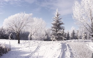Desktop HD Wallpaper Winter Trees Snow Mountains Day