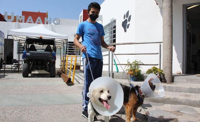 Campaña de esterilización de mascotas al 2X1 en Querétaro durante agosto