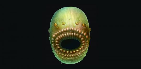 Pesquisadores afirmam ter encontrado ancestral mais antigo do ser humano
