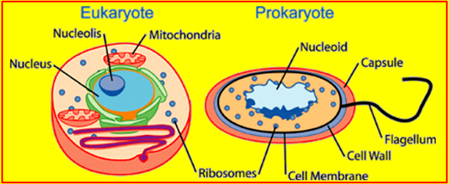 जिव विज्ञान के सजीवों का परिचय - Introduction to the biology