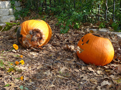 What can you do with a pumpkin? From decoration to dessert, and even decomposition