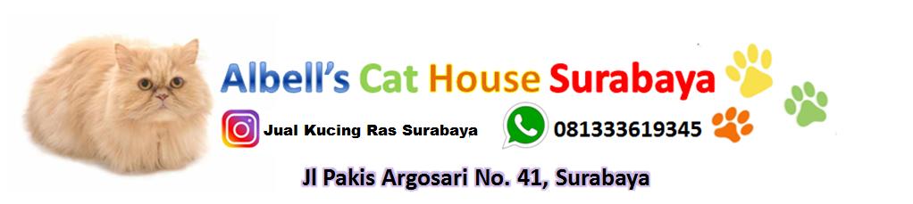 Jual Adopsi Kucing Persia Petshop Grooming Surabaya