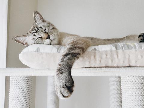 キャットタワーのてっぺんで寝てる猫