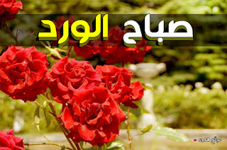 صور صباح الورد,  صباح الخير, صباح الورد
