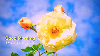 Good morning wishes with Rose flower blue sky