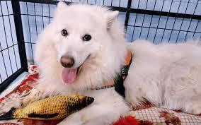 cães confinados