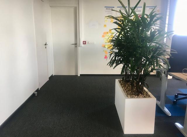 Planten voor bedrijven in Limburg Brussel Vlaams Brabant Antwerpen prijzen op aanvraag