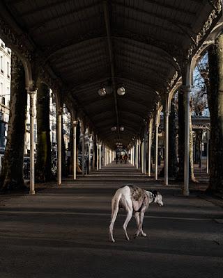 Villa Mon Plaisir chronique livre photo Ambroise Tézenas aux éditions FIligranes