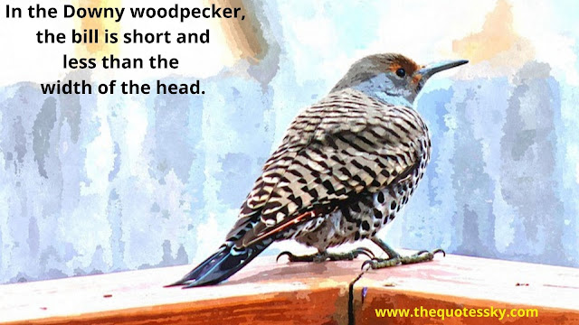 Woodpecker Quotes & Captions For Instagram [ 2021 ]