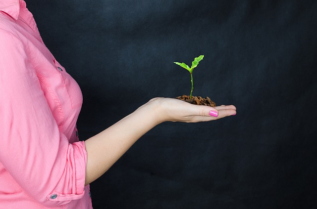 Essay on Save Trees for School Students.