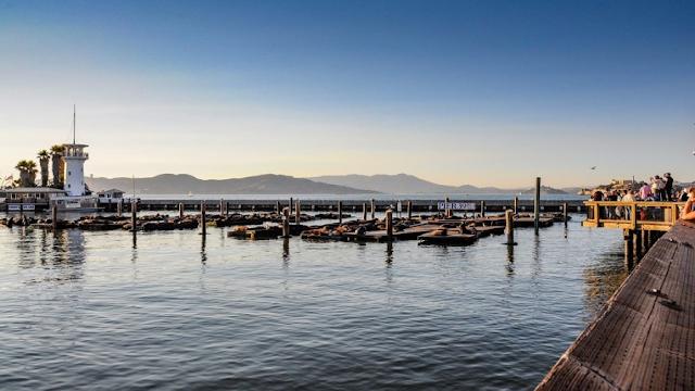 6 choses à faire sur la Pier 39 à San Francisco