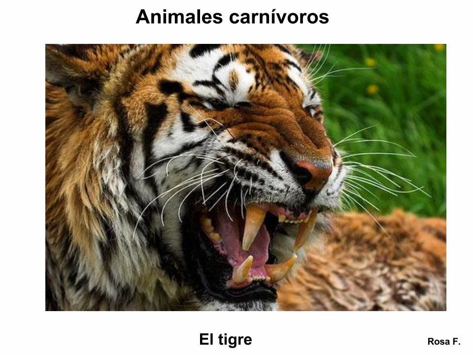 Imagenes De Animales Carnivoros Para Colorear: Maestra De Primaria: Animales Carnívoros. Vocabulario En