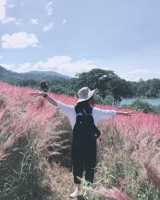 Đến với Đà Lạt hãy ngắm đồi cỏ hồng đuôi chồn đẹp tựa xứ Nhật Bản đẹp mê hồn 6