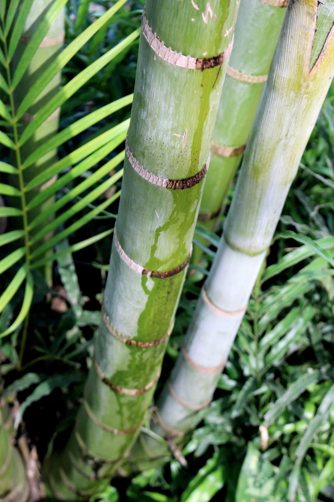 Tropical nature photography bamboo