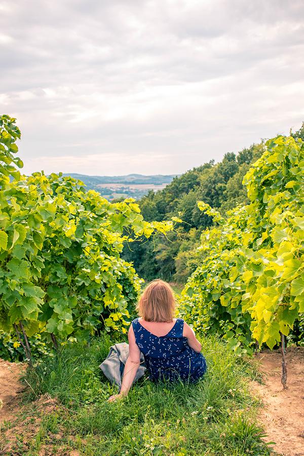 Magiczne polskie winnice - Winnica Dąbrówka