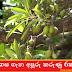මී ගස ගැන අපූරු කරුණු 6ක් (Madhuca longifolia - Mi Gasa)